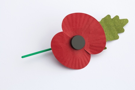 Poppy for Remembrance Day - isolated on white background  photo