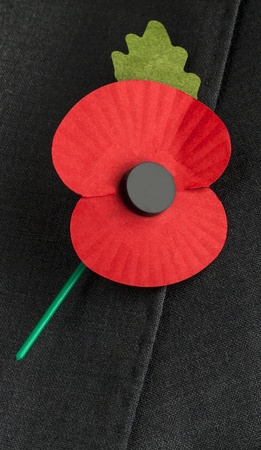 remembrance day poppy: Poppy for Remembrance Day - copy   text space  Stock Photo