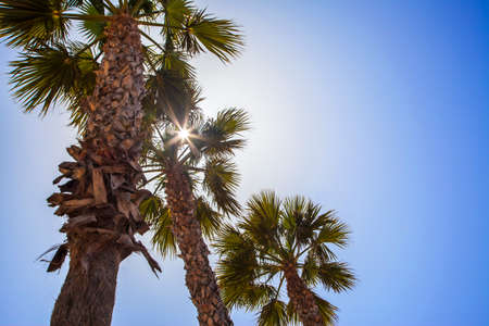 Palm trees with tropical sunshine and summer blue sky. photo