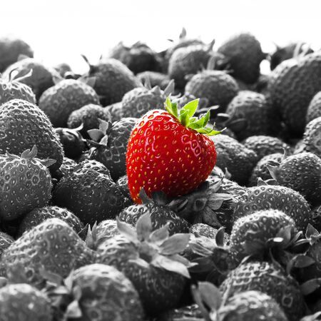 noticeable: Business Advertising - Stand Out. Business concept with bright red strawberry against many other black and white strawberries.