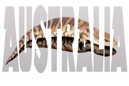 The word Australia filled with iconic Australian image - blue tongue lizard Tiliqua scincoides. Best for advertising, posters and memes. Landscape format isolated on white. Inspiration - reptile love Stock Photo - 125244844