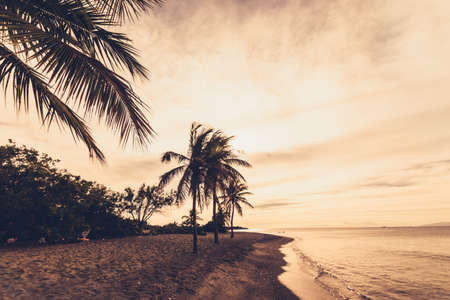 Caribbean Sunset at the beach with palm trees Banque d'images