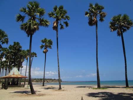 nusa: LASIANA BEACH, KUPANG