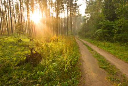 Sunrise in the spring woods photo