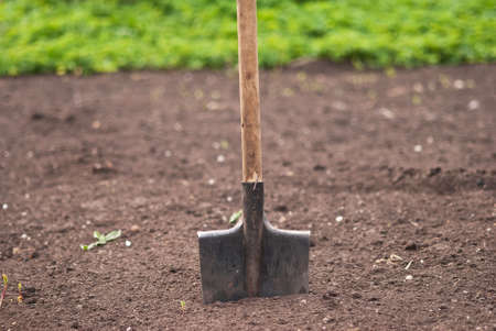 Old garden shovel is ready for use