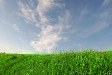 Spring green grass on blue sky