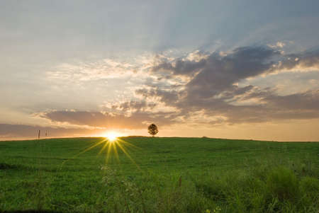 Summer dawn with a single tree Stock Photo