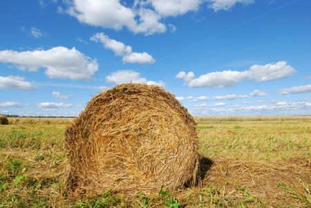 Ripe wheat field, agriculture, harvest Stock Photo