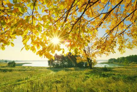 arboles frondosos: Puesta de sol a trav�s de ramas de �rboles