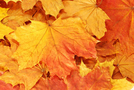 Leaves background photo