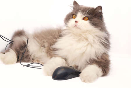 Cat with computer mouse on white background Stock Photo