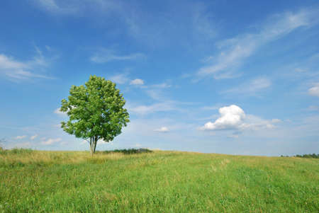 Lone tree in green meadow with blue sky
