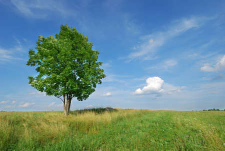 Lone tree in green meadow with blue sky photo
