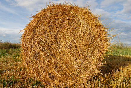 Golden hay bale on sky background photo