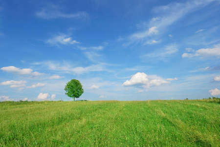 Summer landscape - green field and lonely tree photo