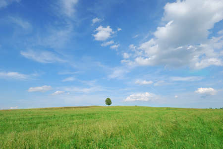 Lone tree in green meadow with blue sky Stock Photo - 7887493