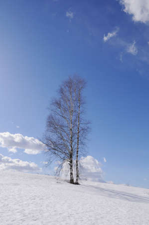 Lonely bare tree on wintertime Stock Photo - 9857649
