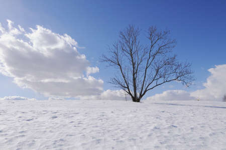 Lonely bare tree on  hill, winter season Stock Photo - 9857648
