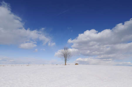 Winter scene, shot of  flying clouds above lonely tree Stock Photo - 9857645