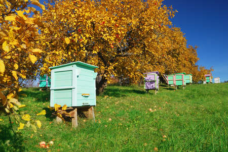 Honey bee hives in autumnal apple garden photo