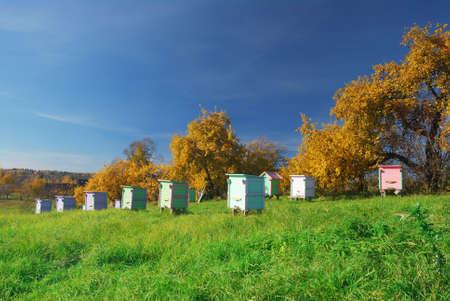 Honey bee hives in autumnal apple garden Stock Photo