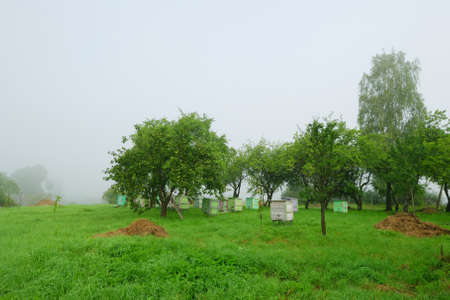 Shoot of foggy morning in apple orchard with beehives Stock Photo
