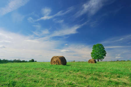 Shot of lonely tree on field with hay bales