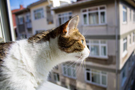 Domestic cat is looking outside with curiosity, side view. Focus on the cat's face and blurred building is behind her. Reklamní fotografie