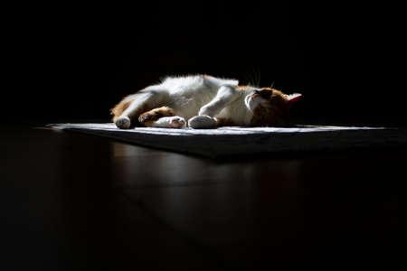 cat under a beam of light in dark concept