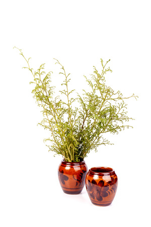 earthenware pots can plant isolated with white background