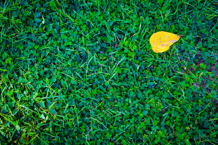 Artificial grass texture for background Banque d'images