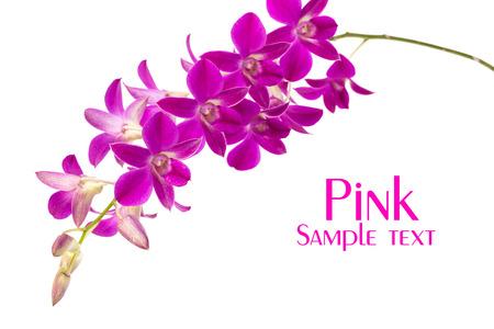 Purple Phalaenopsis orchids close up