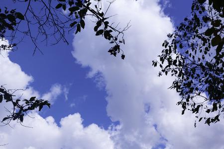 leaves against blue sky Banque d'images