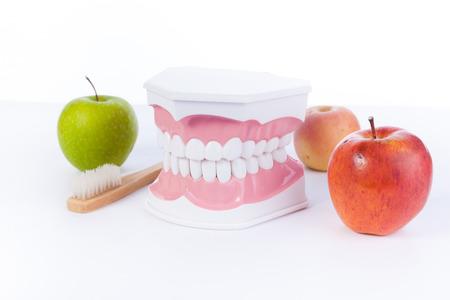 molares: Apple y modelo de los dientes humanos  salud dental