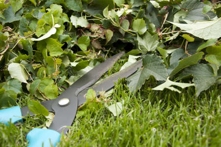 Hedge trimmer  photo