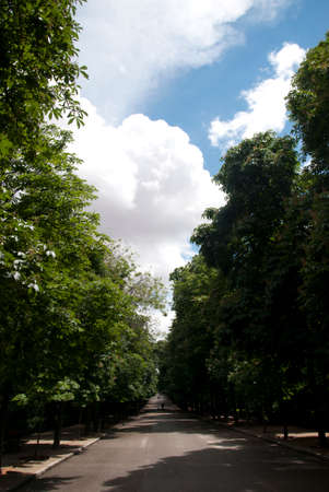Vieuw of a beautifull park road in spring photo