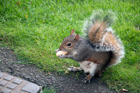 Very lovely squirrel eating a nut in the park photo