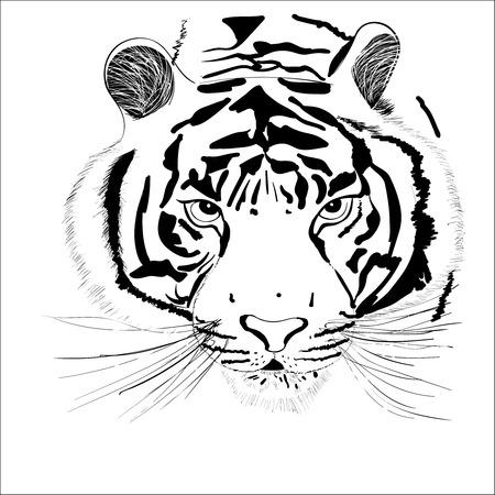 la tête d'un tigre abstrait sur un fond blanc