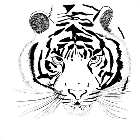 the head an abstract tiger on a white background