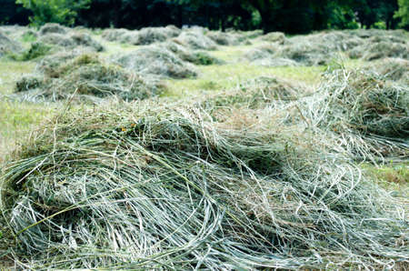 fourwheeldrive: Cutting edge from cut and uncut grass in rousse Stock Photo