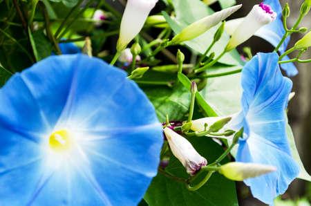 specificity: Beautiful blue flower close-up. Seasonal specificity.