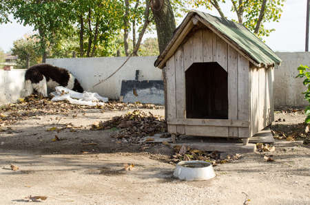 doghouse: Wooden doghouse Stock Photo