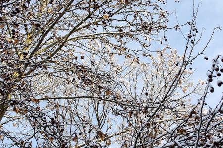 frozen trees: Frozen trees in winter season background view