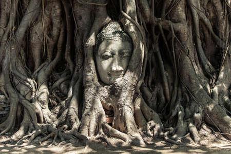 cabeza de buda: Cabeza de Buda en las ra�ces del �rbol, Tailandia Foto de archivo