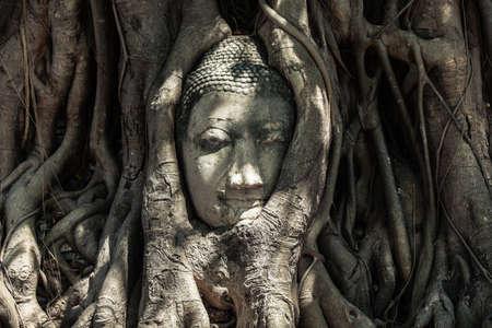 cabeza de buda: Cabeza de Buda en las ra�ces del �rbol, Ruinas de Sukotai