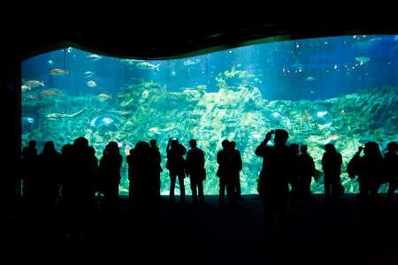 People watching big aquarium in Hong Kong Ocean Park on March 15, 2012.