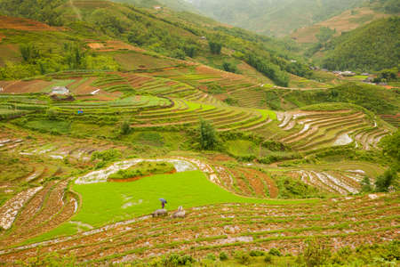 paddies: Rice paddies in the mountains near Sapa village, Northern Vietnam.