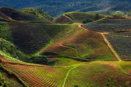 Fields in the mountains near Sapa village, Northern Vietnam. photo