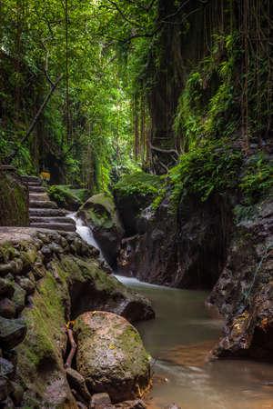 Monkey Forest Sanctuary, Ubud, Bali, Indonesia Stock Photo - 56451952