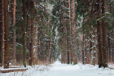 Красивая лесная дорога, покрытая снегом, Россия